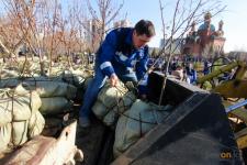 Более 4500 деревьев высадили павлодарцы в период месячника по благоустройству города