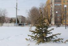 Павлодарцам пообещали высадить в этом году 20 тысяч саженцев