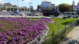 Летом на павлодарских клумбах появится более 500 тысяч цветов