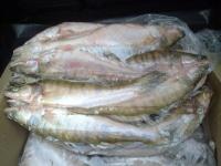 Больше полтонны рыбы вернулось в Павлодар