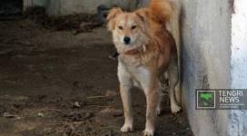 """Забивший """"просто так"""" свою собаку житель Павлодара избежал наказания"""