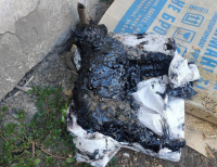 Тонувших в битуме щенков спасли павлодарские зооволонтеры