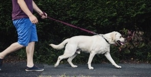 В Павлодаре определили шесть мест для выгула собак
