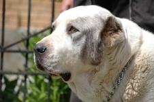 Экибастузецвыплатит свыше 60 тысяч тенге за нападение своей собаки
