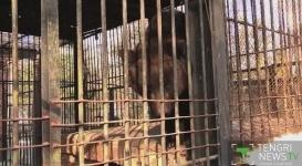 В шымкентском зоопарке испуганная фейерверками медведица съела детенышей