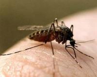 Непобедимые комары и мошки