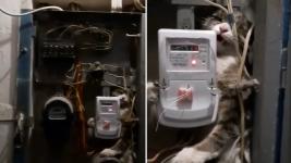 Ради спасения кошки в Аксу обесточили 90 квартир