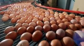 В ценовом сговоре заподозрили поставщиков и производителей яиц