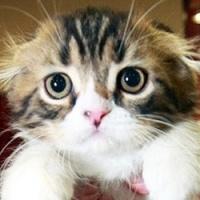 Полиция спасла 800 котов, предназначенных китайски