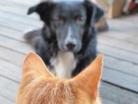 Предупреждения за нарушение правил содержания собак и кошек в этом году получили 157 павлодарцев