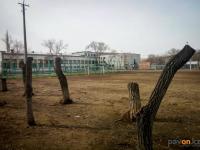 В школах Павлодара срубают аварийные деревья