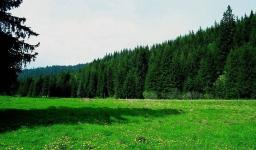 В рейтинге актуальных проблем у жителей Прииртышья экология на пятом месте