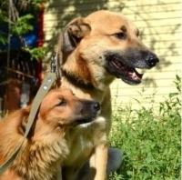 В Павлодаре пройдет областное дог-шоу беспородных собак