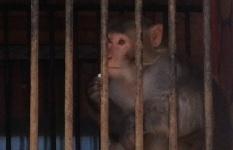 Павлодарцы вынуждены подкармливать голодных обитателей приезжего зоопарка