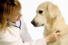 Ветеринарные клиники Павлодара